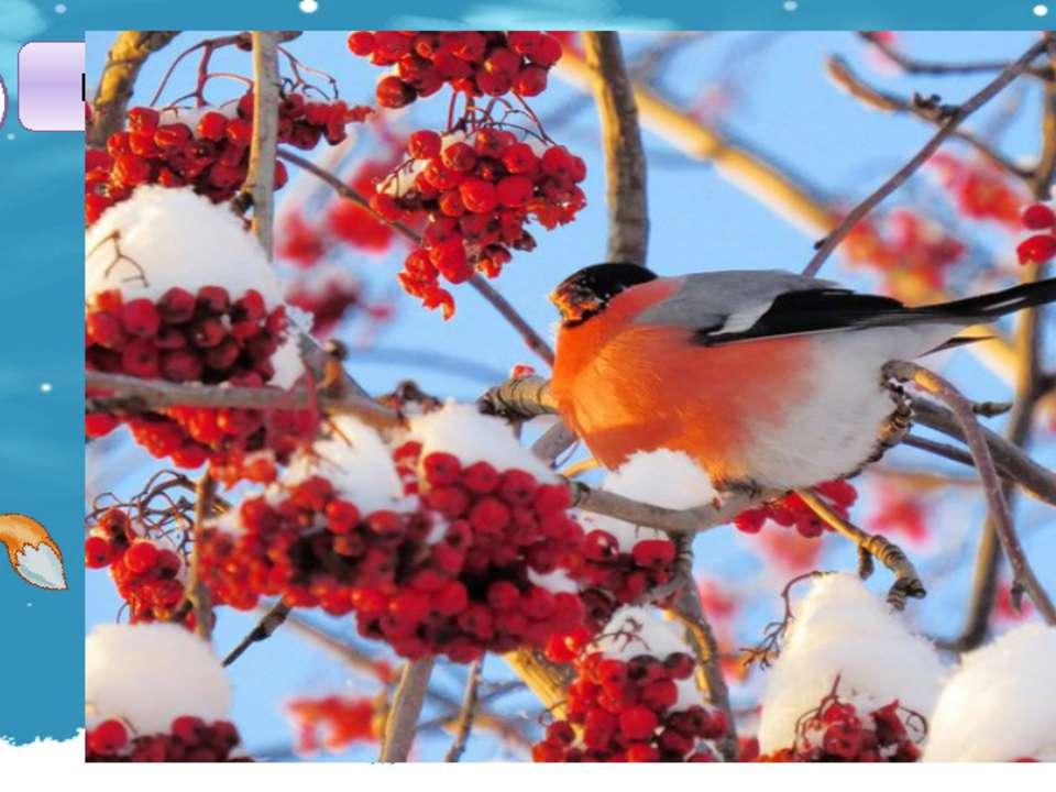 Какое дерево кормит зимой снегирей и свиристелей? А2 1. ЕЛЬ 2. СОСНА 4. ДУБ 3...