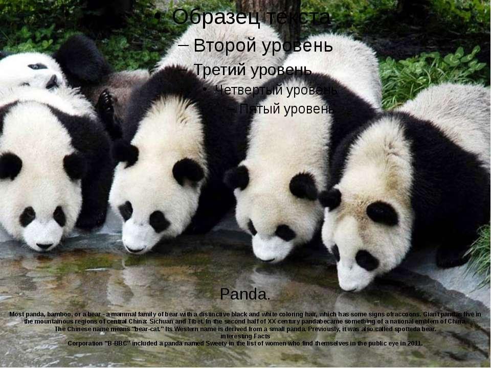 Panda. Mostpanda,bamboo, ora bear -a mammalfamily ofbearwith a distinc...