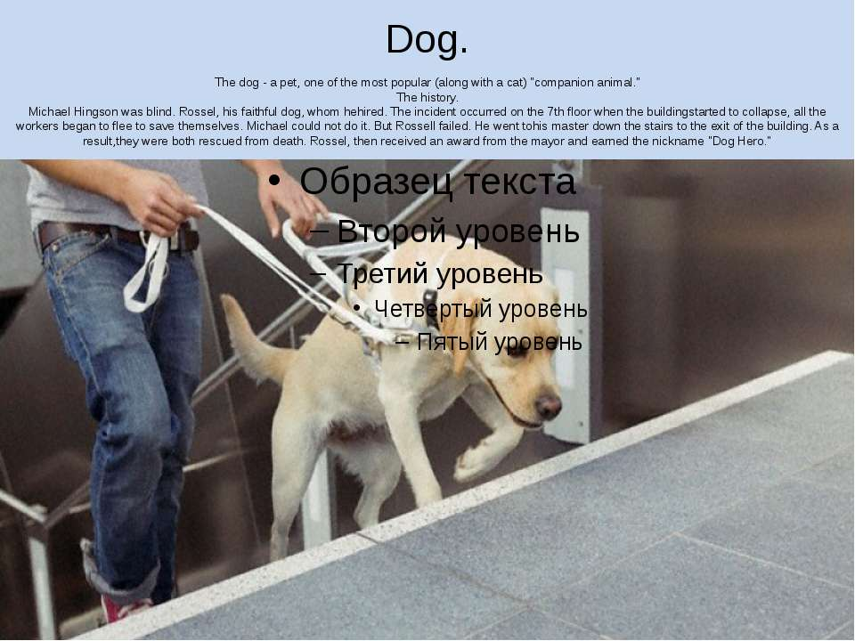 "Dog. The dog - a pet, one of the most popular (along with a cat) ""companion a..."