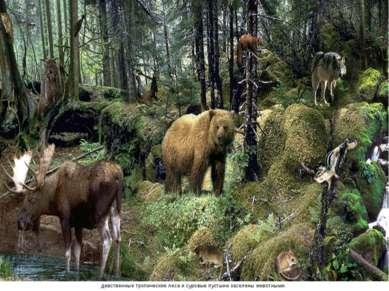 девственные тропические леса и суровые пустыни заселены животными.