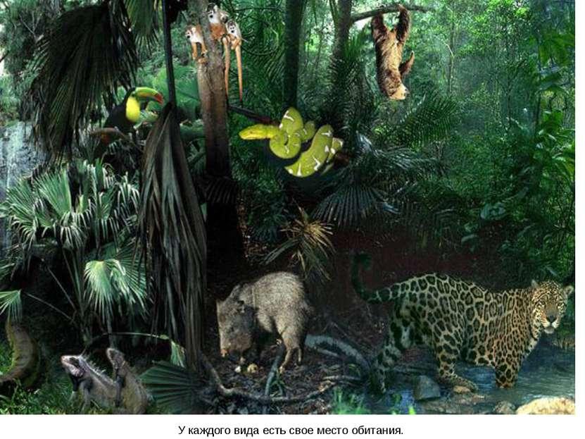 У каждого вида есть свое место обитания.