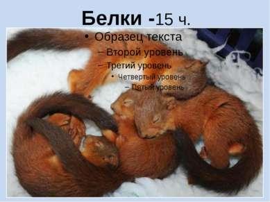 Белки -15 ч.