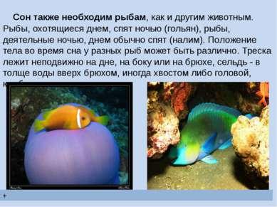 Сон также необходим рыбам, как и другим животным. Рыбы, охотящиеся днем, спят...