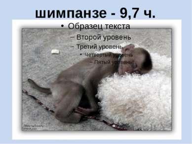шимпанзе - 9,7 ч.