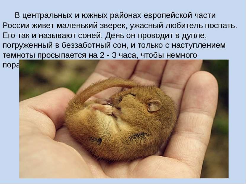 В центральных и южных районах европейской части Россииживет маленький зверек...