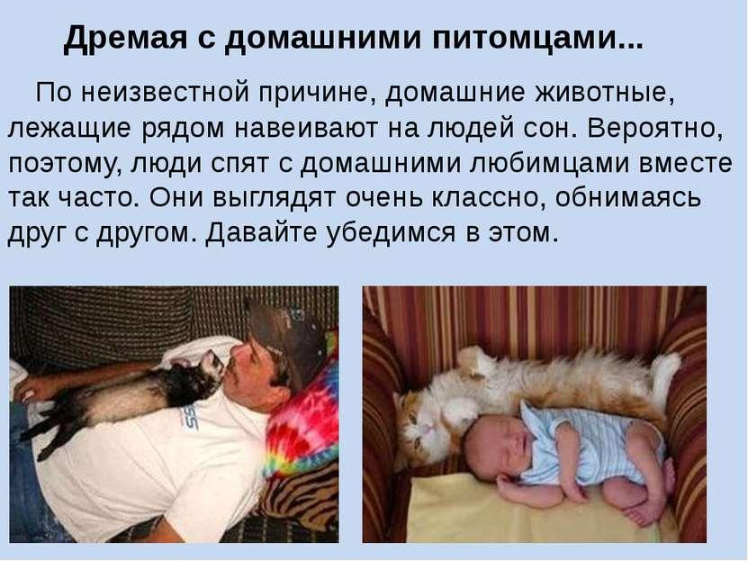 По неизвестной причине, домашние животные, лежащие рядом навеивают на людей с...