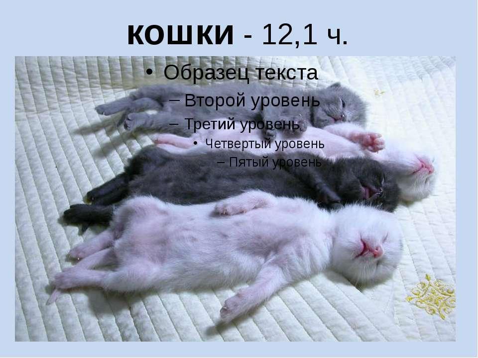 кошки - 12,1 ч.