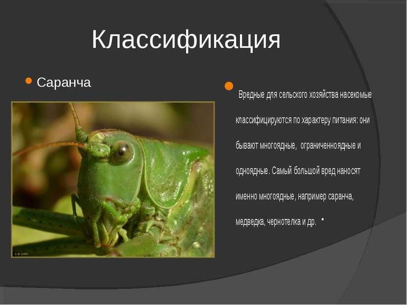 Классификация Саранча Вредные для сельского хозяйства насекомые классифицирую...