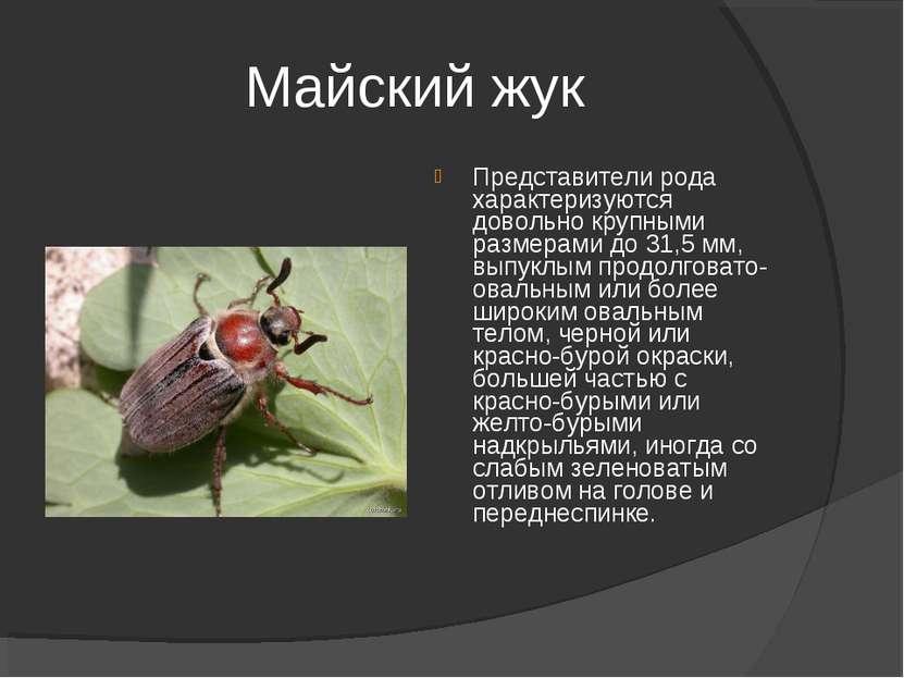 Майский жук Представители рода характеризуются довольно крупными размерами до...