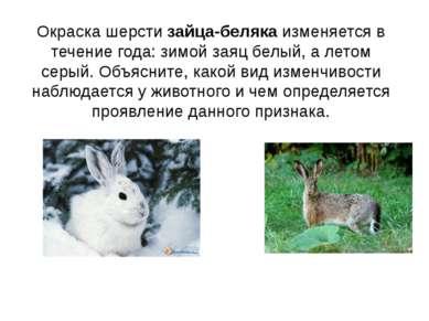 Окраска шерсти зайца-беляка изменяется в течение года: зимой заяц белый, а ле...