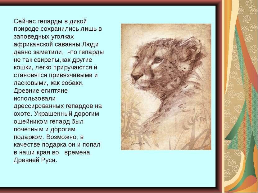 Сейчас гепарды в дикой природе сохранились лишь в заповедных уголках африканс...