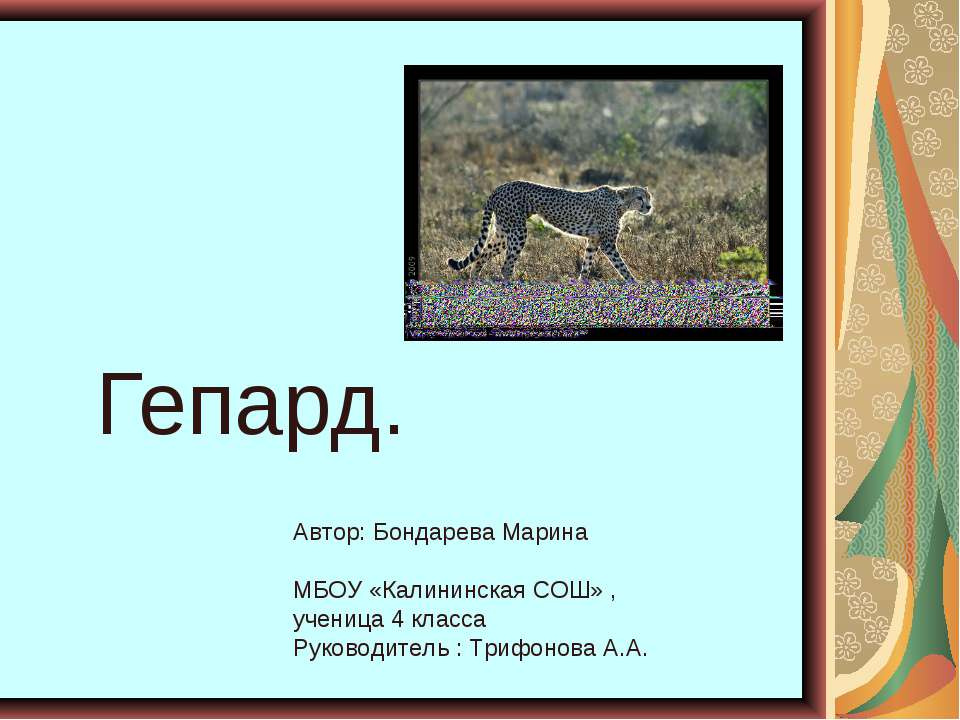 Гепард. Автор: Бондарева Марина МБОУ «Калининская СОШ» , ученица 4 класса Рук...