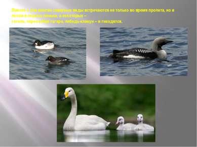 Вместе с тем многие северные виды встречаются не только во время пролета, но ...