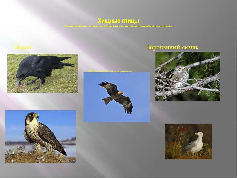 Хищные птицы У хищников крупные сильные ноги, вооруженные острыми когтями, кр...