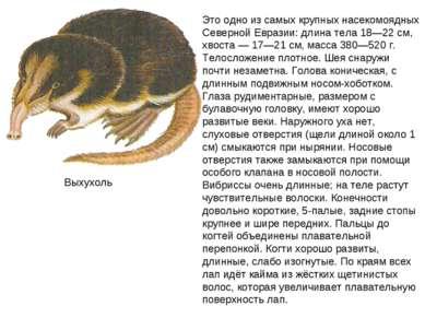 Выхухоль Это одно из самых крупных насекомоядных Северной Евразии: длина тела...