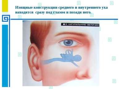 Изящные конструкции среднего и внутреннего уха находятся сразу под глазом и п...