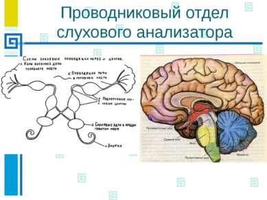 Физиология органа слуха