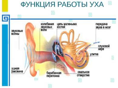 Звуковосприятие