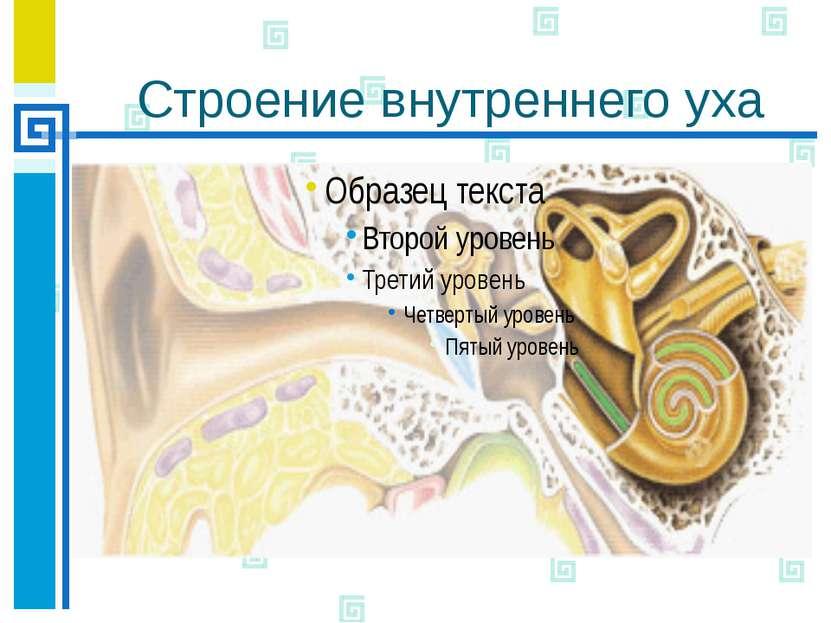 Строение внутреннего уха