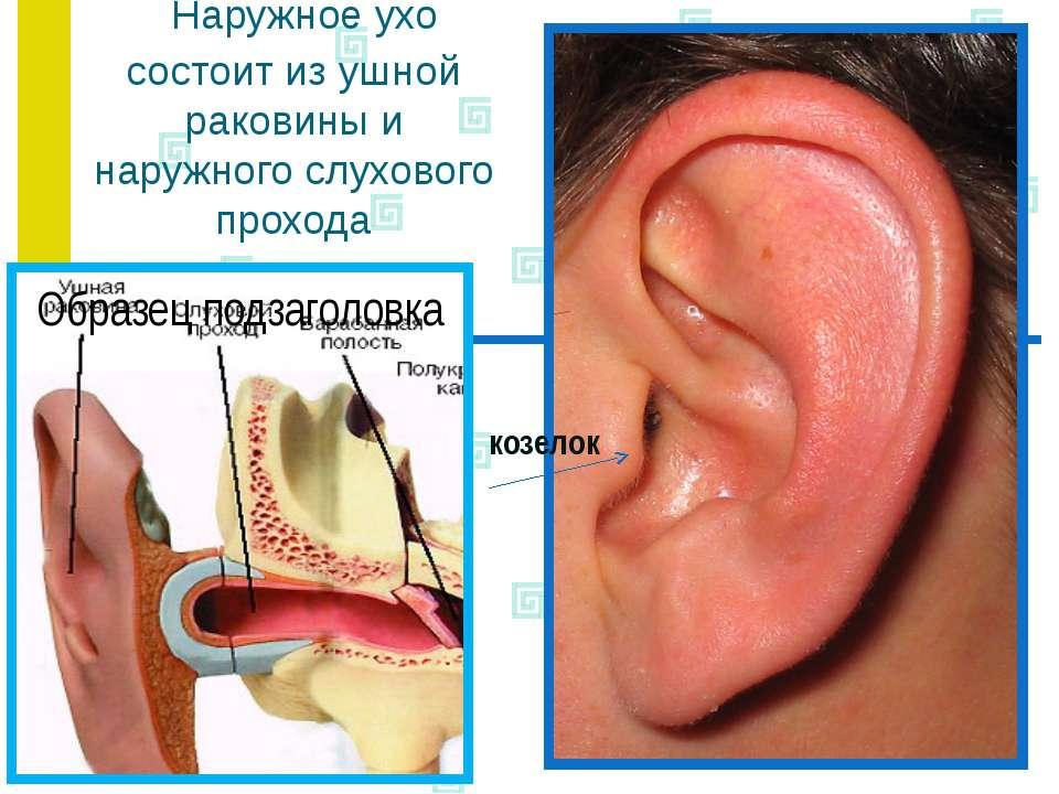 Наружное ухо состоит из ушной раковины и наружного слухового прохода козелок