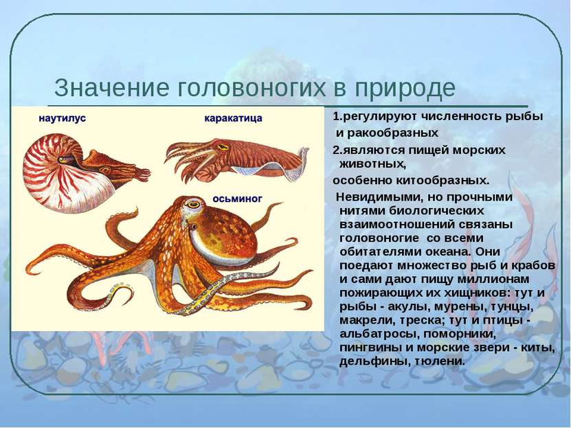 Значение головоногих в природе 1.регулируют численность рыбы и ракообразных 2...