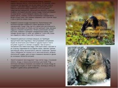 Лемминги — небольшие мышевидные грызуны, размером немного меньше крысы, с кор...