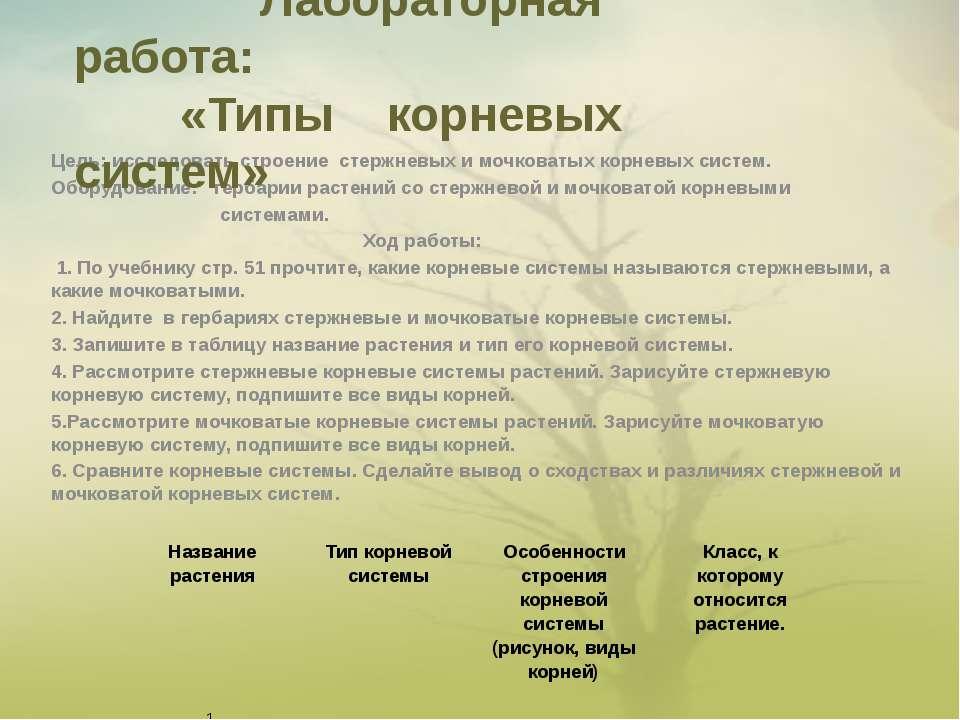 Цель: исследовать строение стержневых и мочковатых корневых систем. Оборудова...