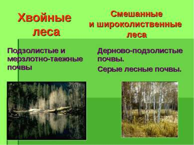 Хвойные леса Смешанные и широколиственные леса Подзолистые и мерзлотно-таежны...