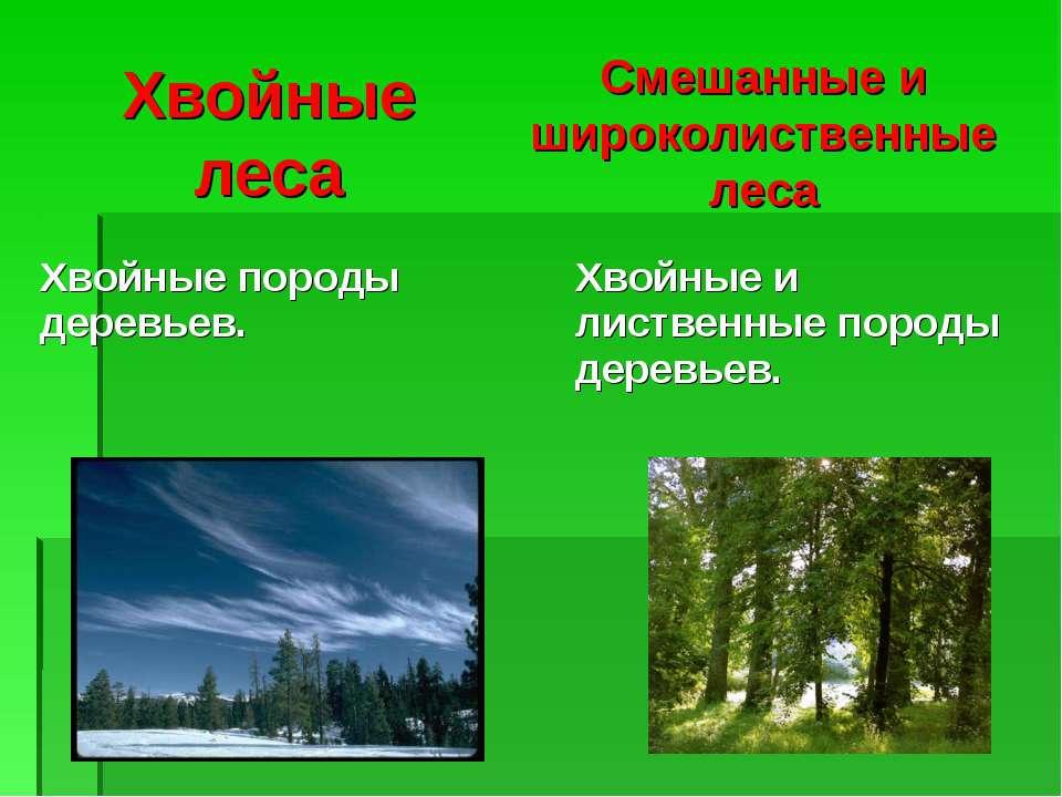 Хвойные леса Смешанные и широколиственные леса Хвойные породы деревьев. Хвойн...