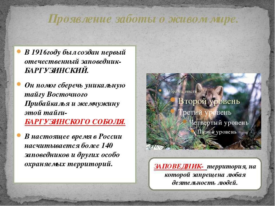 В 1916году был создан первый отечественный заповедник- БАРГУЗИНСКИЙ. Он помог...