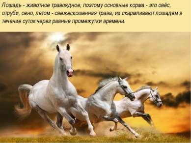 Лошадь - животное травоядное, поэтому основные корма - это овёс, отруби, сено...