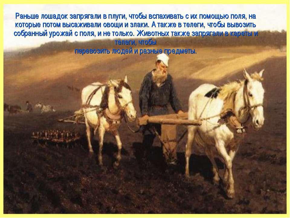 Раньше лошадок запрягали в плуги, чтобы вспахивать с их помощью поля, на кото...