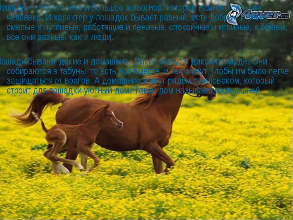 Лошадь — это сильное и большое животное, которое намного сильнее человека. И ...