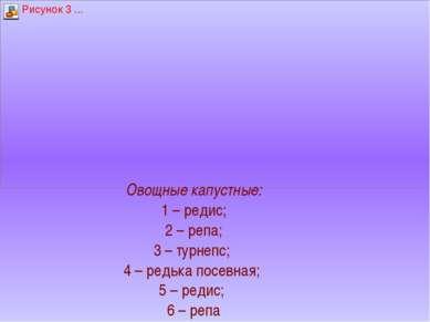Овощные капустные: 1 – редис; 2 – репа; 3 – турнепс; 4 – редька посевная; 5 –...