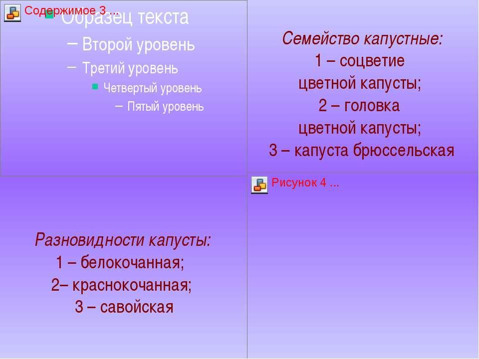Разновидности капусты: 1 – белокочанная; 2– краснокочанная; 3 – савойская Сем...