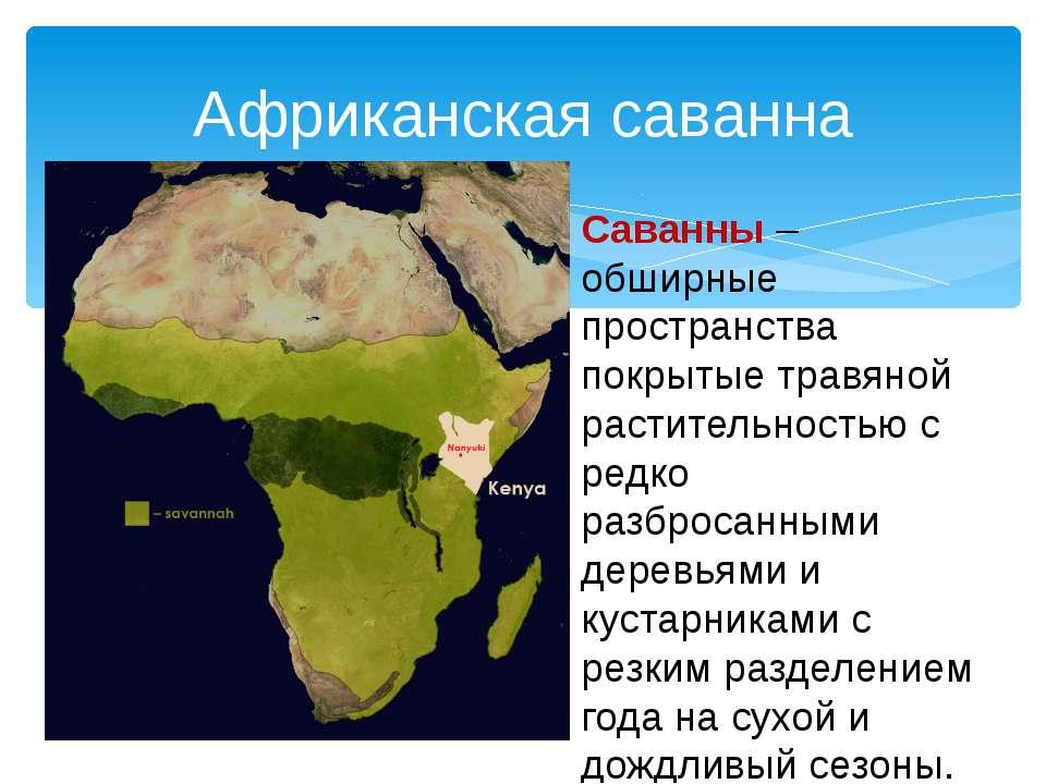 Африканская саванна Саванны – обширные пространства покрытые травяной растите...