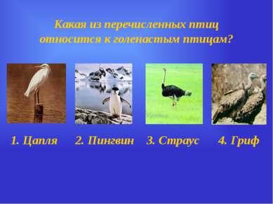 Какая из перечисленных птиц относится к голенастым птицам? 1. Цапля 2. Пингви...