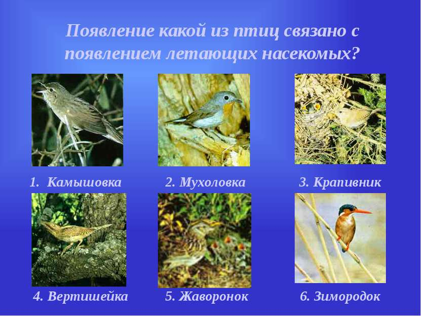 Появление какой из птиц связано с появлением летающих насекомых? 1. Камышовка...