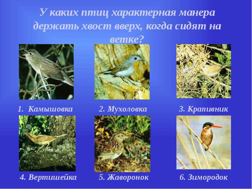 У каких птиц характерная манера держать хвост вверх, когда сидят на ветке? 1....