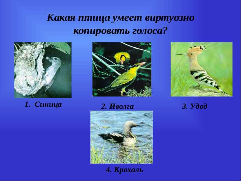 Какая птица умеет виртуозно копировать голоса? 1. Синица 2. Иволга 3. Удод 4....