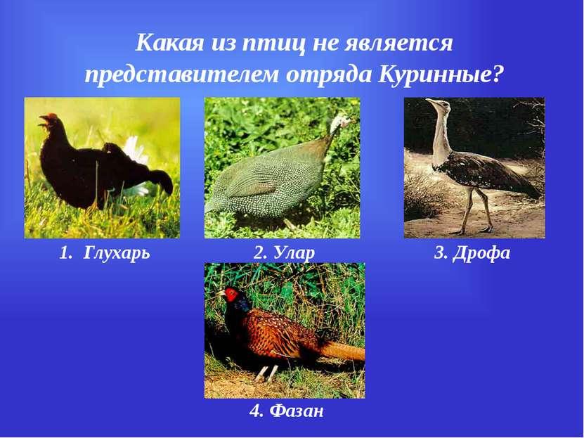 Какая из птиц не является представителем отряда Куринные? 1. Глухарь 2. Улар ...