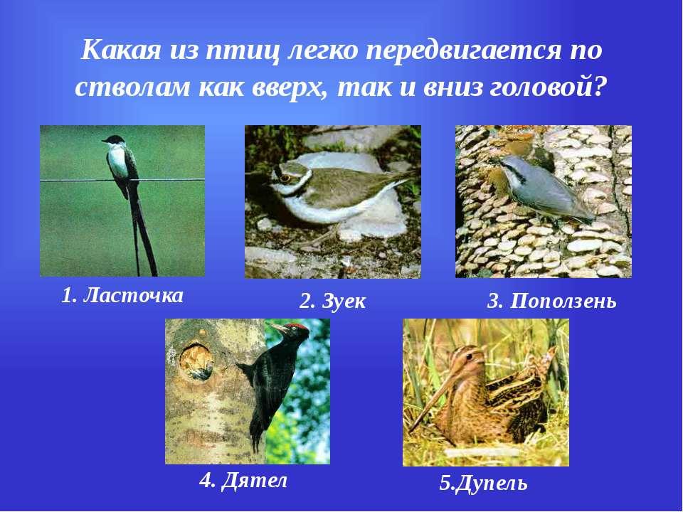 Какая из птиц легко передвигается по стволам как вверх, так и вниз головой? 1...