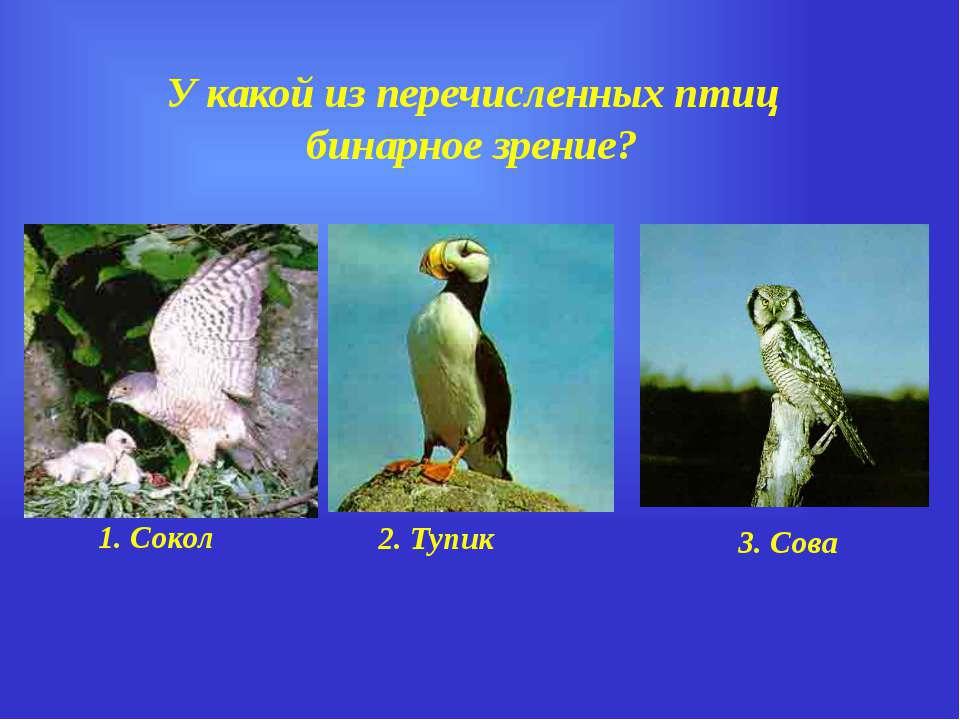У какой из перечисленных птиц бинарное зрение? 1. Сокол 2. Тупик 3. Сова