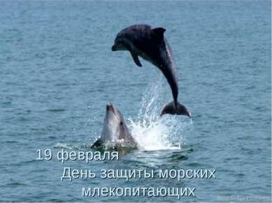 19 февраля День защиты морских млекопитающих