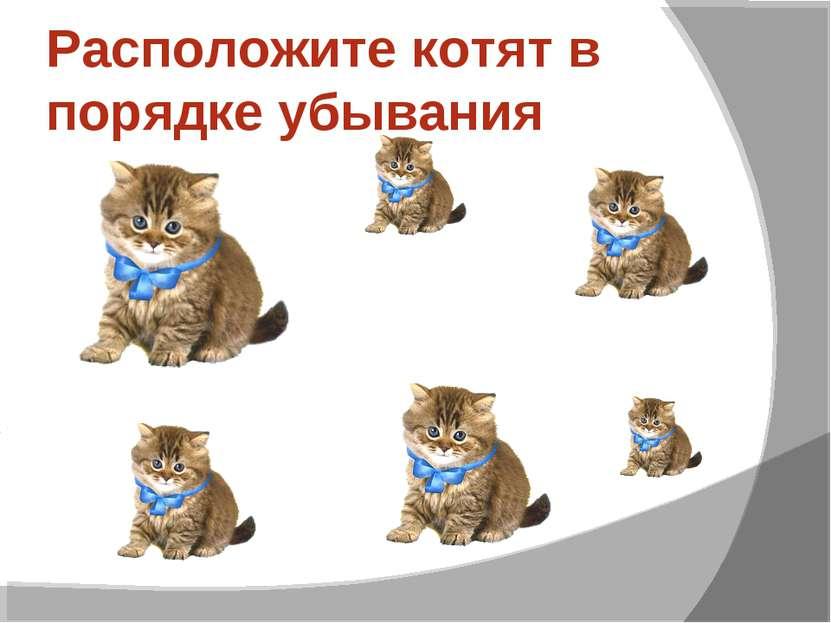 Расположите котят в порядке убывания