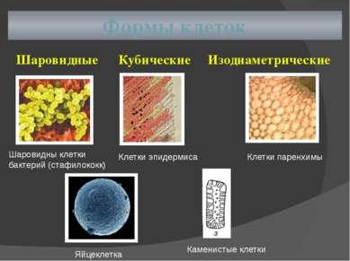 Формы клеток Шаровидные Кубические Изодиаметрические Шаровидны клетки бактери...