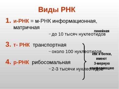 Виды РНК и-РНК = м-РНК информационная, матричная до 10 тысяч нуклеотидов т- Р...