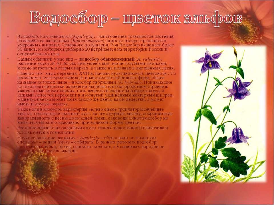 Водосбор, или аквилегия (Aquilegia), – многолетнее травянистое растение из се...