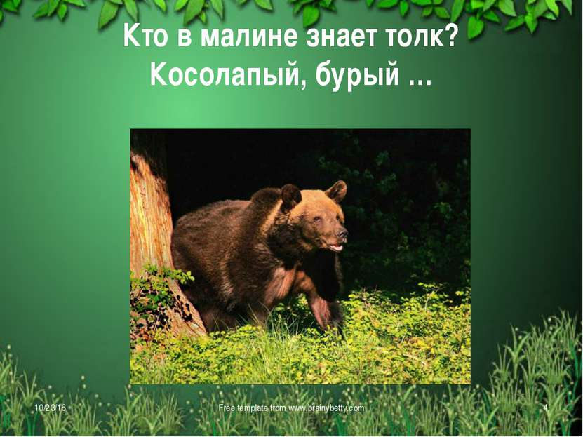 Кто в малине знает толк? Косолапый, бурый … * Free template from www.brainybe...