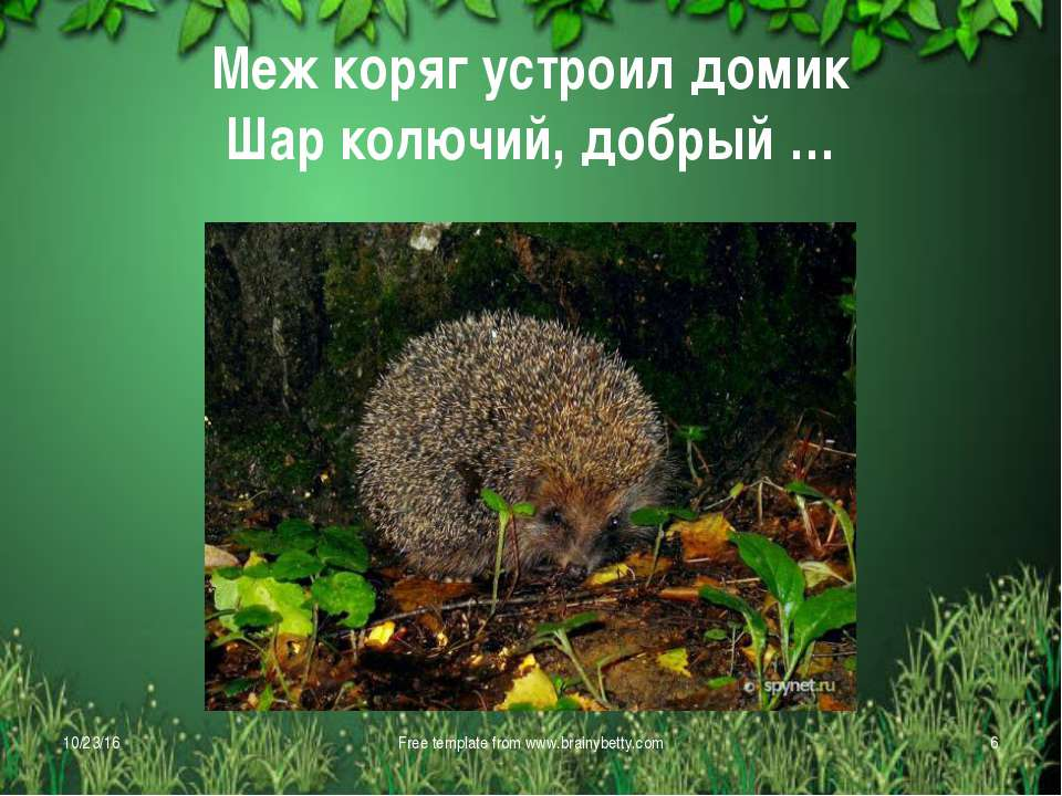 Меж коряг устроил домик Шар колючий, добрый … * Free template from www.brainy...